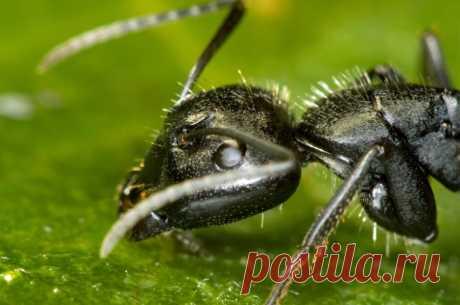 Пчеловодство для начинающих, основные советы и рекомендации