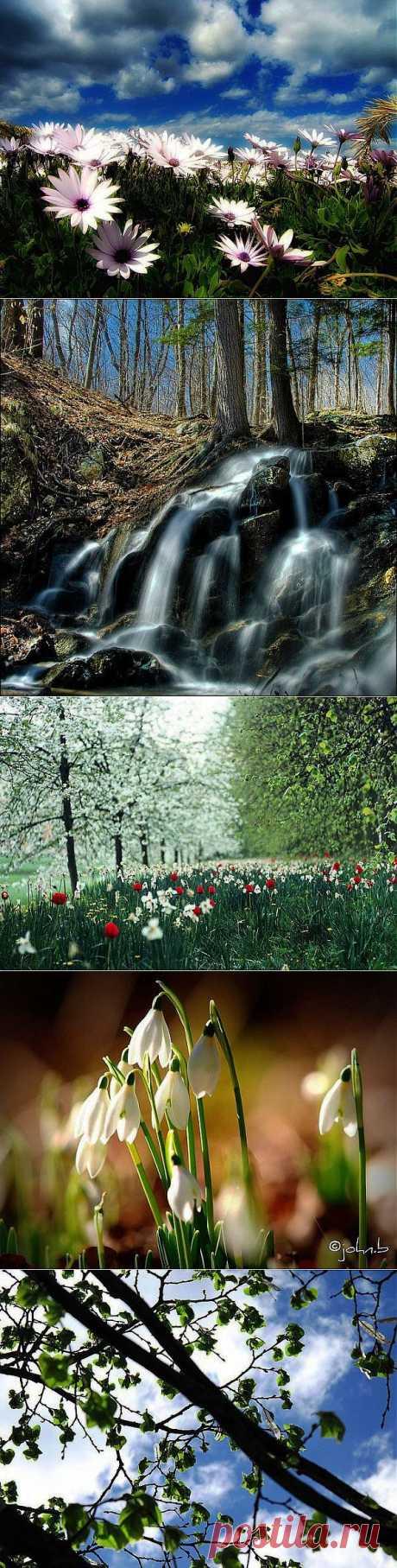 Потрясающая весна