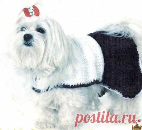 Como vincular para el perro la ropa – En blanco y negro el vestido - Puramente el GATO