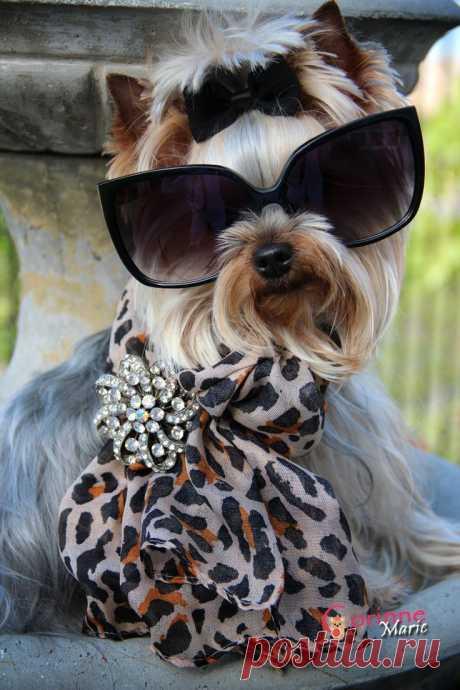 """Hello Dahling"" | Pets"