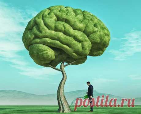 12 признаков высокого интеллекта по версии ученых: а какие есть у вас?