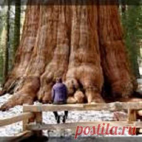 """Как очиститься от негативной энергии и улучшить самочувствие с помощью деревьев... - Познавательный сайт ,,1000 мелочей"""" - медиаплатформа МирТесен"""