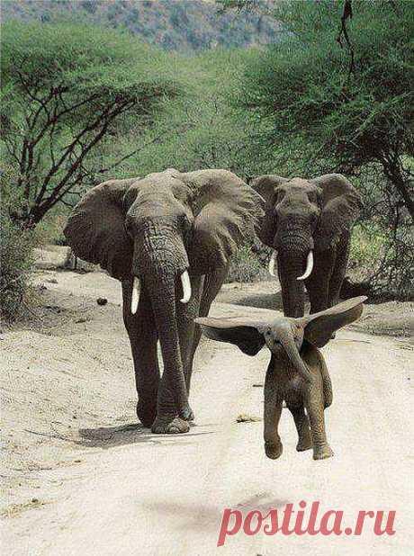 Взрослые слоны прыгать не умеют... А малышня даже летать может...