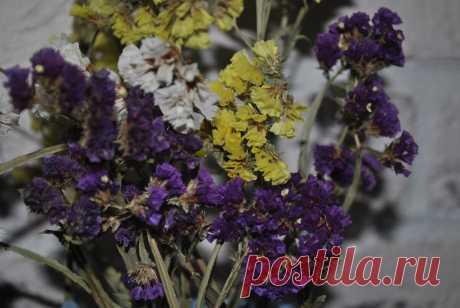 Зимой и летом - одним цветом. Как легко вырастить статицу.