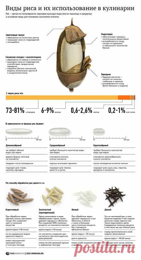 Виды риса и их использование в кулинарии | Newpix.ru - позитивный интернет-журнал