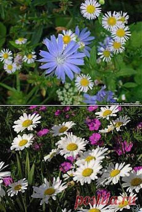 полевые цветы    :)