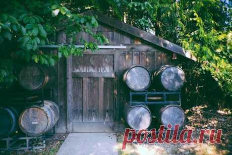 Делают ли в Абхазии порошковое вино? | Aviaskyner.Ru | Яндекс Дзен