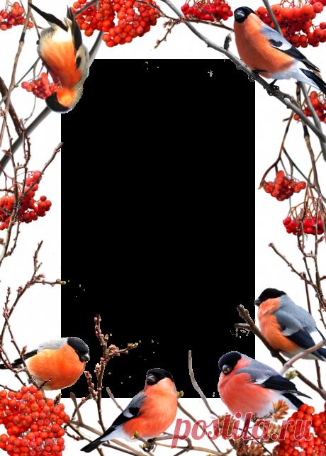 0_a8184_ad9e8d31_orig.png (PNG Image, 915×1280 pixels) - Scaled (45%)