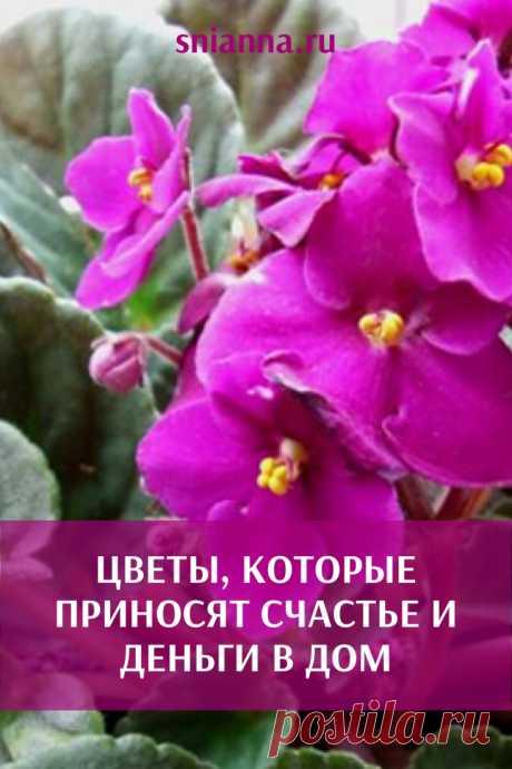 Цветы, которые приносят счастье и деньги в дом  Эти растения красивые и приносят пользу! С тех пор, как у меня дома растет калатея, деньги всегда есть! ➡️ Читайте, кликнув на фото