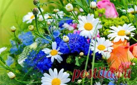 А ВЫ ЛЮБИТЕ ПОЛЕВЫЕ ЦВЕТЫ???   Я люблю полевые цветы Васильки, незабудки, ромашки.Замираю от их красоты, И душа моя нараспашку...