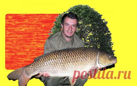 Пол ведра карасей с помощью плавленого сыра | О рыбалке 🎣 | Яндекс Дзен
