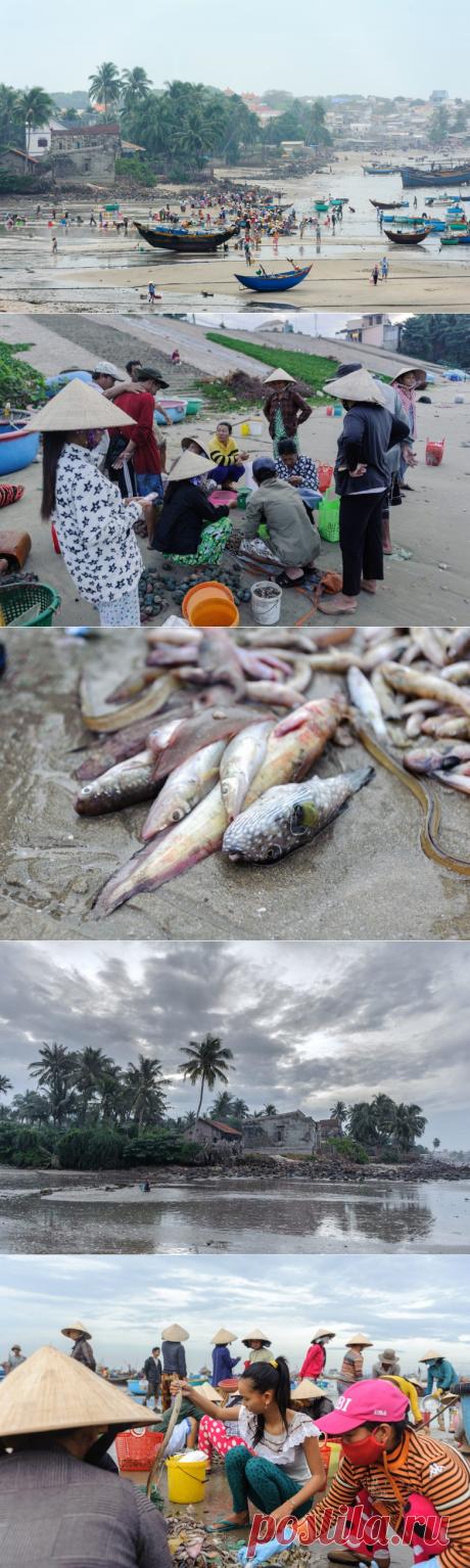Мы пришли на рыбный рынок! / Туристический спутник