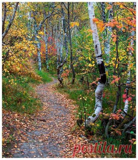 Фото Тропинкой в осень - фотограф Галина Щипакина - пейзаж, природа - ФотоФорум.ру