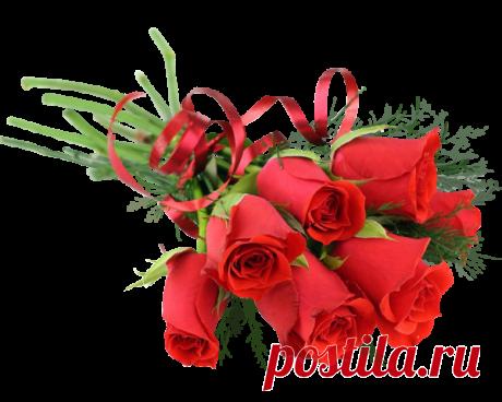 Розы PNG( из сети)