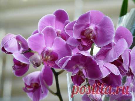 По каким причинам у орхидеи опадают цветы — как это исправить
