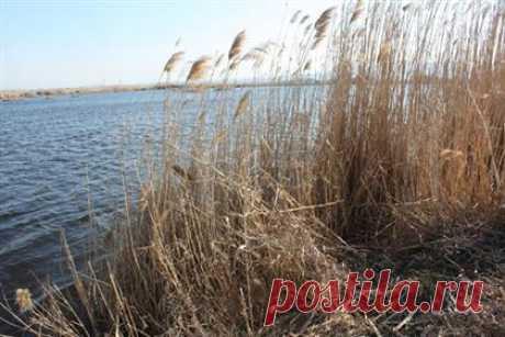 Медленная смерть: как убивали красивейшее озеро в Казахстане - Караван | Караван