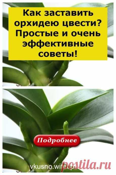 Как заставить орхидею цвести? Простые и очень эффективные советы! - vkusno