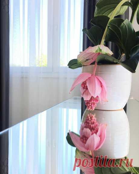 5 редких и красивых комнатных растений, которые чудесно будут чувствовать себя на солнцепеке | Дом Мечты Элис | Яндекс Дзен