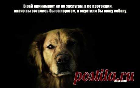 Высказывания о собаках в картинках