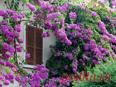 Картинки Цветы Цветущие деревья 1600x1200