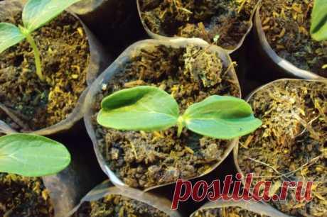 Подкормка огурцов: от подготовки грядки до сбора урожая