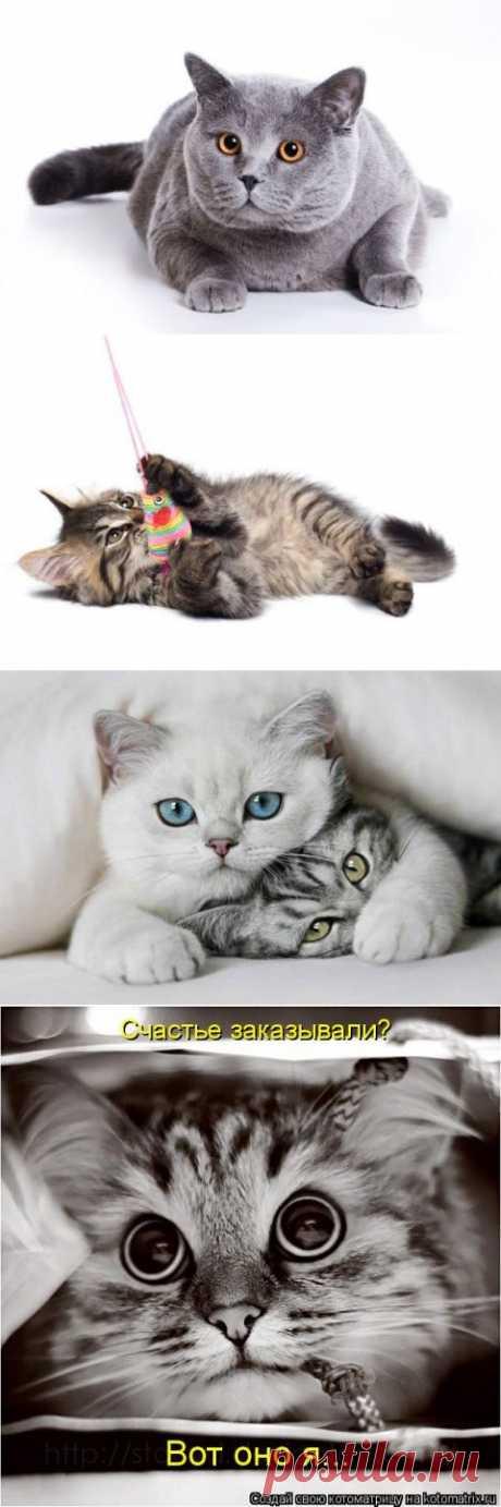 Интересные факты о кошках.   Разно Всяко