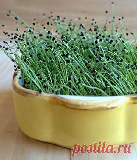Микрозелень дома без прорастителя
