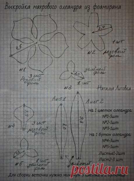 олеандр.jpg / Облако Mail.Ru