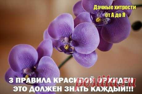 3 ПРАВИЛА КРАСИВОЙ ОРХИДЕИ. ЭТО ДОЛЖЕН ЗНАТЬ КАЖДЫЙ! Сохраните, чтобы не потерять! Не затягивайте с пересадкой Пересаживают орхидеи один раз в два-три года, по окончании цветения или в конце периода покоя. Но часто это приходится делать сразу после покупки.  Дело в том, что перед продажей орхидеи пересаживают в более влагоемкий субстрат, чем им требуется. Это позволяет растениям перенести транспортировку, но может вызвать загнивание корней. В этом случае с пересадкой стоит...