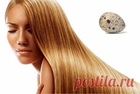 Яйцо для волос и водка от выпадения: видео-инструкция по уходу своими руками, лечение, как втирать, чем полезно, перепелиные яички, польза белка, фото и цена