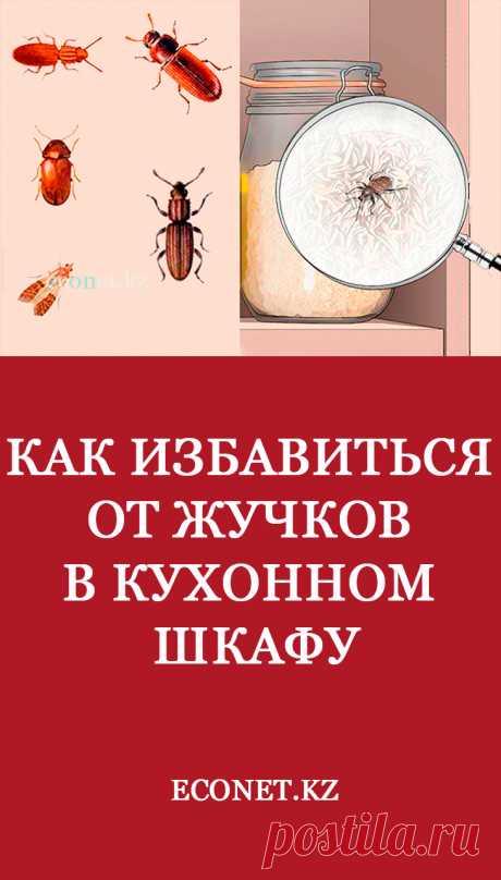 Как избавиться от жучков в кухонном шкафу  Появление на кухне насекомых и вредителей не всегда указывает на нечистоплотность хозяйки. Паразиты портят продукты питания, крупы и муку, наносят убытки, откладывая личинки. Поэтому при первых признаках жучков необходимо провести обработку и избавиться от них.