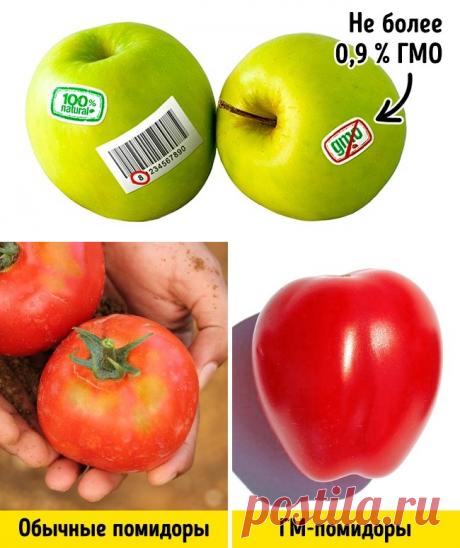 3 modos simples de distinguir GMO de los productos regulares