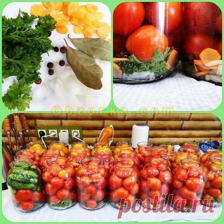 Маринованные помидоры По-болгарски отзывы, где купить, цена, развод ли?