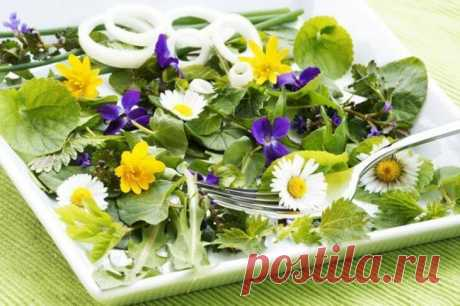 Съедобные сорняки—кладезь витаминов! Оказывается, среди сорняков есть очень много съедобных и полезных экземпляров. Это просто кладезь витаминов и жизненной силы! Чтобы вырастить лук и укроп, надо очень постараться, а эти молодцы растут ...