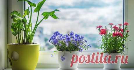 Лучшие комнатные растения для дома по фен-шуй: цветы семейного счастья - kolobok.ua По законам фен-шуй, цветы в доме обладают определенной энергией: положительной и отрицательной, мужской энергией Инь, и женской - Ян. Какие комнатные растения должны быть в доме, чтобы в нем было счастье, здоровье и материальное благополучие?