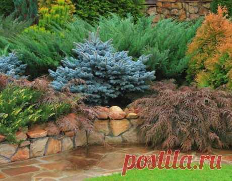 Хвойные растения в дизайне дачного участка: сочиняем хвойный сад