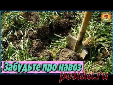 СИДЕРАТЫ которые заменят НАВОЗ Самые лучшие сидераты для сада и огорода ДАЧНЫЕ СОВЕТЫ