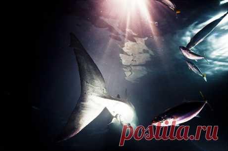 Фото акулы: фотографии самых больших акул на охоте от Майкла Мюллера