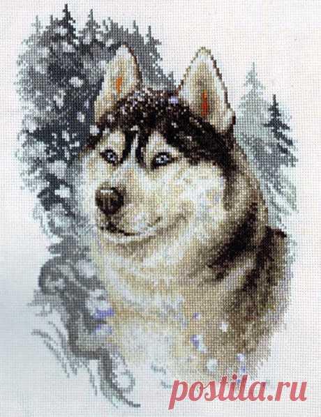 Хаски в снегу/Схема