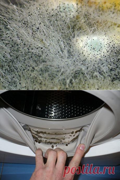 Как вывести плесень из стиральной машинки