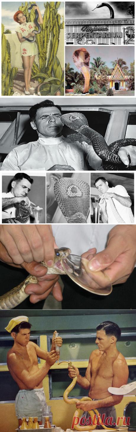"Его 172 раза кусали ядовитые змеи, а он остался жив. История ""человека-змеи"" | Планета зверей | Яндекс Дзен"