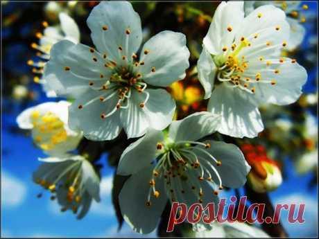 Прекрасные цветы Планеты