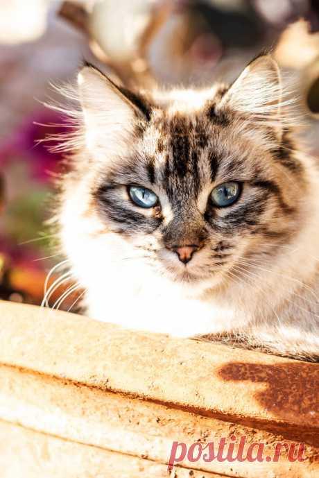 Kitten in a vase by seredream on DeviantArt