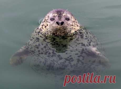 «Я само совершенство» В портфолио Михаила еще много крутейших фото из мира дикой природы на воде (и под водой) – полистайте: nat-geo.ru/community/user/50127/