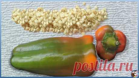 Тестирование семян томатов и перцев для рассады. 100% - ный результат на всхожесть | Жизнь в деревне | Яндекс Дзен