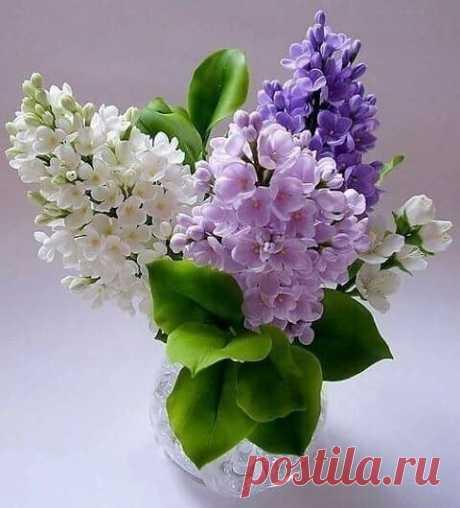 Утро доброе ,Мир!!! В глазах - зима,а в душе - уже весна !!!:)