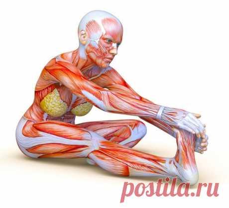 Примеры упражнений, которые помогут избавиться от болей в спине