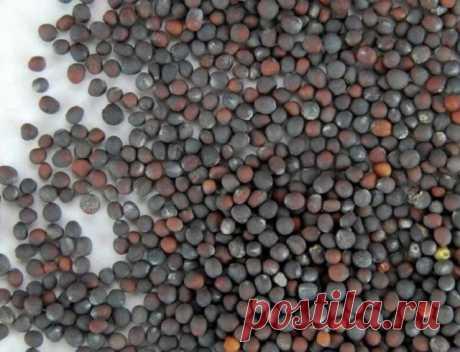 Июль – самое время для посева пекинской капусты