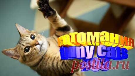 Вам нравится смотреть смешные видео про котов? Тогда мы уверены, Вам понравится наше видео 😍. Также на котомании Вас ждут: видео кот,видео кота,видео коте,видео котов,видео кошек,видео кошка,видео кошки,видео о котах, видео о кошках, видео приколы, видео про кота, видео с котиками, видео с кошками, видео смешная кошка, видео смешное о кошках, видео смешные, видео эти смешные кошки, говорящие коты видео, для котов, для кошек, и кошки, кот видео, кот смешное видео, котик, котики мило,