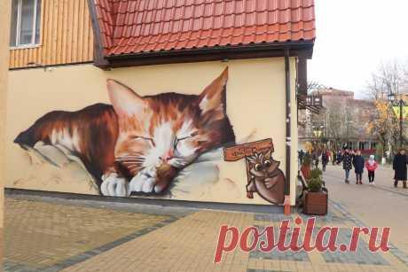 Побывала в «мировой столице кошек» - Зеленоградске: невозможно быть таким милым, а он - есть   Соло-путешествия   Яндекс Дзен